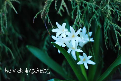 hiding-hyacinth