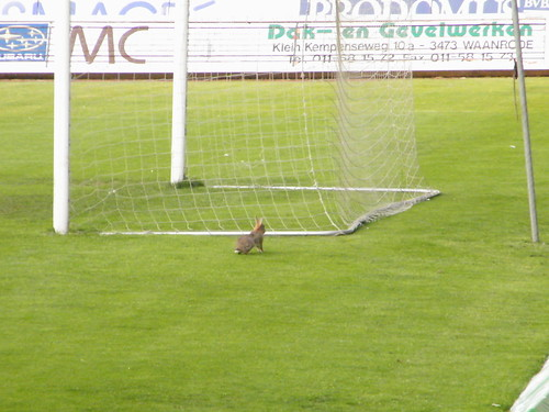 Bunny eating the pitch