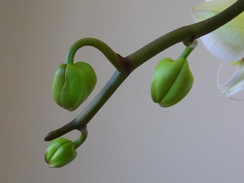 Flower 3of4