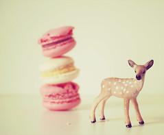 Macaron Deer ♥
