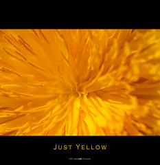 Just Yellow