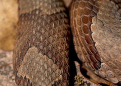 """C-Falls - snake skin pattern • <a style=""""font-size:0.8em;"""" href=""""http://www.flickr.com/photos/30765416@N06/5701531063/"""" target=""""_blank"""">View on Flickr</a>"""