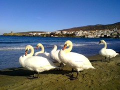 SWANS ON THE SEA in Andros Chora Greece (dimitra_milaiou) Tags: summer sky sea sand landscape horaandros greece beach andros swan life nature animal waves duck aigaio sun summertime neimporio hora greek island view chora hellas cyclades  white blue europe  fantasticnature birds dimitra milaiou    visit