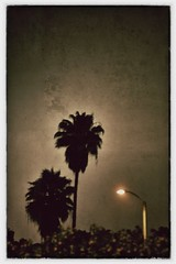night & fan palm. (howard-f) Tags: city sky texture night dark frames nikon glow halo palm iphone ipad mexicanfanpalms nikond700 iphoneography ipad2 snapseed niksnapseedapp editedonipad2