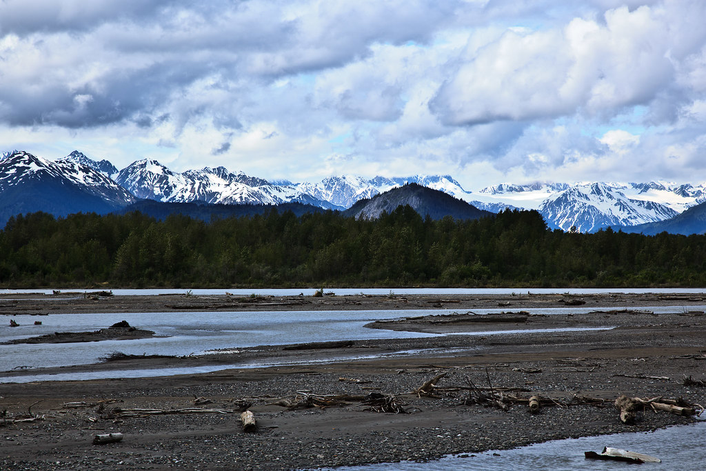 Driftwood on the Chilkat River