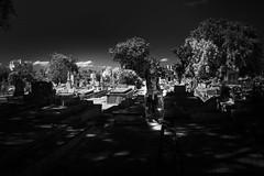 Cristobal Colon Cemetery - Havana (IV2K) Tags: havana habana lahabana cuba cuban cubano kuba caribbean cemetery tomb necropolis bw sony rx1 sonyrx1 zeiss jesus jesuschrist statue