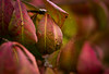 Spider Silk (Captured Heart) Tags: fall autumn autumncolor autumnleaves web spidersilk