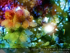 Primavera En Mi Corazn (Spring In My Heart) (#201 Project Music Vs. Photo) (Heredero 3.0) Tags: show park christmas street new old trip travel parque autumn trees light sea vacation portrait people urban espaa music white mountain black flower color colour macro tree art nature water yellow rock night river landscape geotagged photography photo spain friend europe raw photos live natura otoo fujifilm jpeg s700 s5700