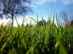 spring 32211 012 (TiffanyLBalagna) Tags: park blue brown white blur holland macro tree green grass garden washington spring focus whidbeyisland blade persepctive oakharbor