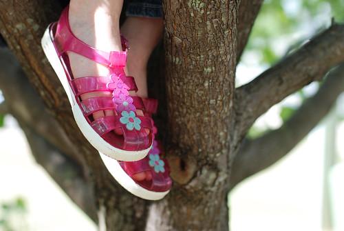 V in tree 002