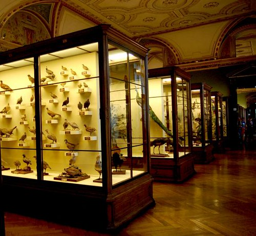 Naturhistorisches (Natural History Museum)