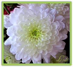 Just a hint of color macro (lou,69.) Tags: friends flower color macro canon march petals gorgeous details powershot louise davidson hintofcolor wonderfulworldofflowers lou69