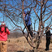 It's time to prune the apple trees at the Van de Water farm in Canton. Photo: Carol Kepes.