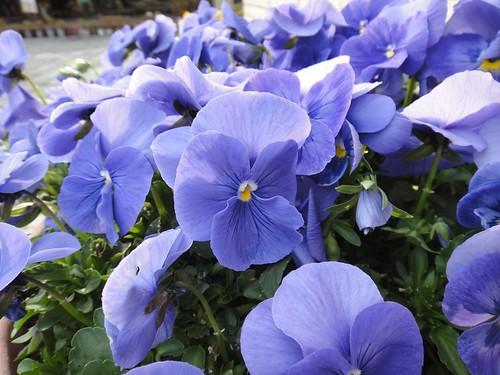 14CD Flower2
