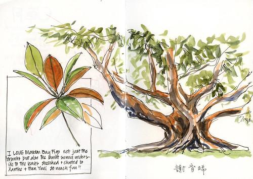 110402_06 Sketchabout 4 Moreton Bay Fig
