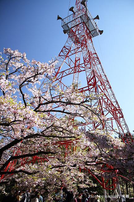 2011阿里山櫻花季晴天版01
