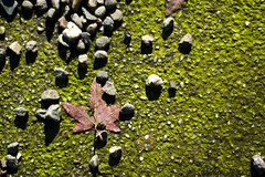 Rough Fall (andrewallenmoore) Tags: green nature rock season leaf moss over ground neighborhood textures rough 6625