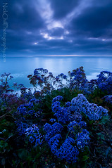 Evening Blues (Nick Chill Photography) Tags: ocean flowers blue sunset evening nikon pacific sandiego fineart westcoast encinitas stockimage d300s tokina1116mm nickchill