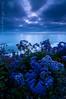 Evening Blues (Nick Chill Photography) Tags: ocean flowers blue sunset evening nikon pacific sandiego fineart westcoast encinitas stockimage d300s tokina1116mm nickchill