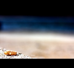 I'd kill for a Nobel Peace prize! (*karla) Tags: blue light sea black beach canon 50mm peace dof bokeh f14 shell