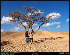 My Friends under a Dhofari Frankincense, Boswellia sacra, Tree in Raysut, Salalah, Dhofar (Shanfari.net) Tags: summer tree nature lumix raw natural panasonic sacra sacred oman fz luban zufar rw2 salalah  sultanate frankincense dhofar  khareef  burseraceae    dufar olibanum  boswellia  encense     libanos candur najdi dhufar  governorate  lubban  shazri   dofar fz38 boswelliasacra fz35 dmcfz35  olibanumtree khunk levonah houjari