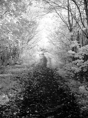 Digital Infrared (Back, and to the left) Tags: uk trees blackandwhite bw leaves ir diy path yorkshire surreal bn homemade infrared converteddigitalinfrared thewoodeffect flickr:user=backandtotheleft tumblr:user=thediaryofadisappointingman