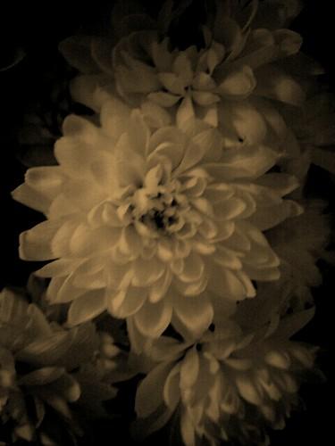 101/365 Vintage Flowers