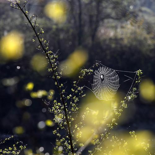 [フリー画像] 花・植物, 植物(その他), クモの巣・糸, 201104180700