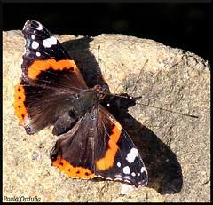 Mariposa 2 / Butterfly 2 (Paula Ordua Photography) Tags: naturaleza nature butterfly mariposa