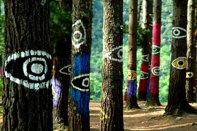 bosque-de-oma_77083