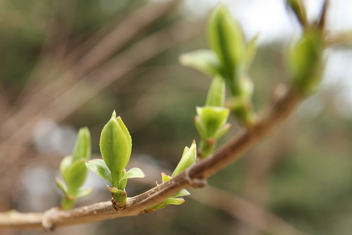 Buds And Blossoms
