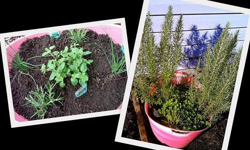 herbs 2010 and 2011
