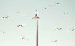 Birds Around (JoyHey) Tags: sky art lamp birds soft pastel fineart photograph dreamy allrightsreserved kristapalmu joyhey wwwjoyheycom