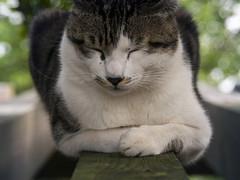 (lintea lin) Tags: cat raw olympus e300 zuiko 貓 18180mm