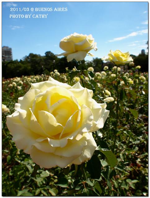 rose plaza-21