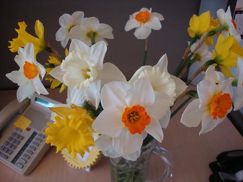 farmer's market daffodils