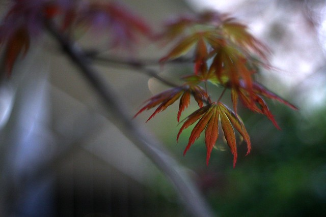 spring leaves (orange)