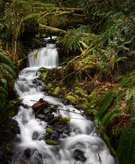daydreamy forest creek 3101 (Light of the Moon Photography) Tags: park lake mountains fern green water creek waterfall washington moss nikon long exposure slow state crescent national shutter olympic lush peninsula silky d7000