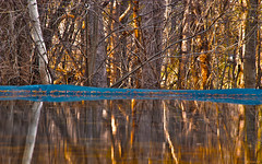 The Gold Rush (a2roland) Tags: new wood blue trees orange sunlight reflection water pool rain yellow swimming swim lens gold dawn golden backyard nikon focus bath mt dusk branches board bottom dive olive sunny norman mount telephoto cover strip rush jersey bathe elevated bathing thick rainwater zeb reddish wooded the heavily d80 a2roland a2rolandyahoocom