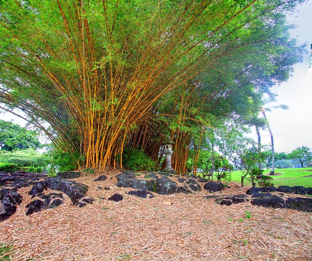Woo Hoo Bamboo