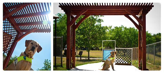 Two Images of a harnessed Guide Dog in Training sitting underneath and large red wooden trellis that is covering part of a wide sidewalk that is used for an obstacle course. The image on the left is from below the dog with the roof of the trellis in the background. The image on the right is from farther away and you can view the whole trellis and parts of the obstacle course in the background.
