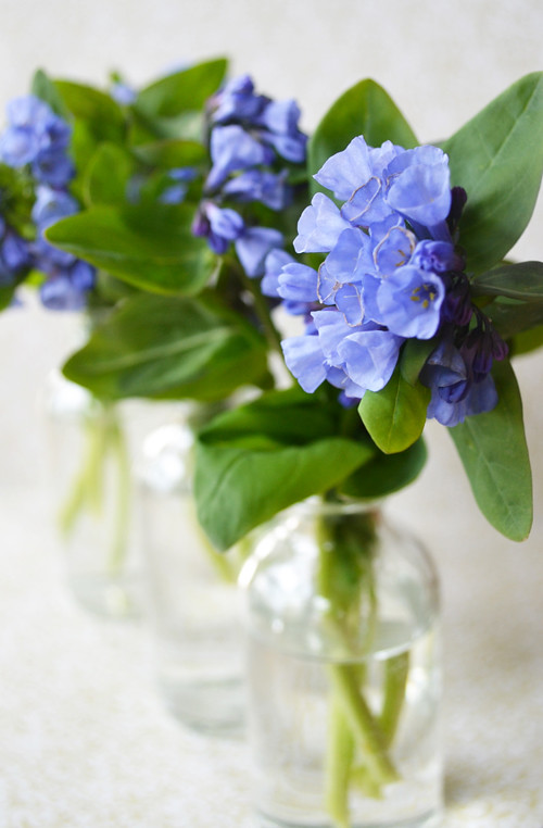 Virginia Bluebells (inside)