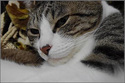 今日の猫(2011-05-04)