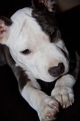IMG_0898 (www.inezitamarchesano.com.br) Tags: raica