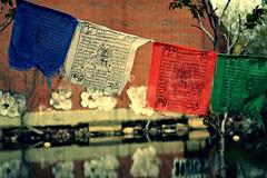 Tibetan prayer flags on the Gowanus Canal (Ryan Rosa) Tags: ocean street nyc newyorkcity trees reflection water colors wall brooklyn writing graffiti daylight canal dof flag prayer outoffocus depthoffield reflect gowanuscanal tibetan gowanus deadend tibetanprayerflag ryanrosa