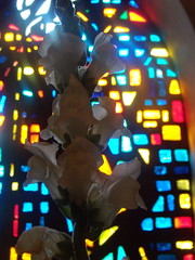 47  275/365  The Color of Easter 3 (stratoz) Tags: white church glass colors spirit many dove holy pa trinity snapdragons descending lansdale whiye