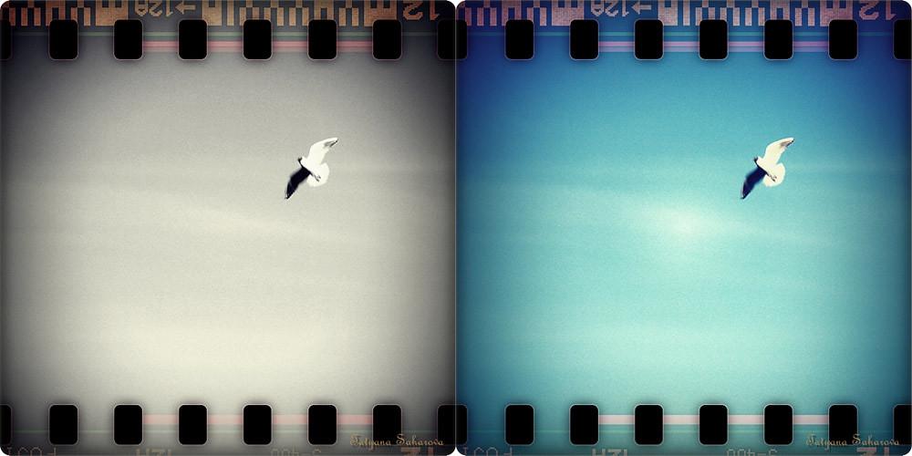 seagull_WEB