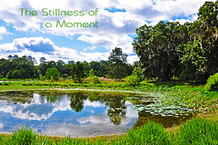Third 12/52 - The Stillness of a Moment (darkfluidity) Tags: trees lake reflection pond third lilypads stillness thirdproject thestillnessofamoment