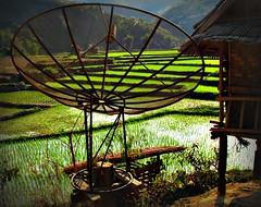 Laos - Febbraio 2011 (anton.it) Tags: verde colore laos 1001nights acqua parabolica magiccity risaia fantasticnature canong10 antonit mygearandme mygearandmepremium mygearandmebronze ringexcellence dblringexcellence tplringexcellence