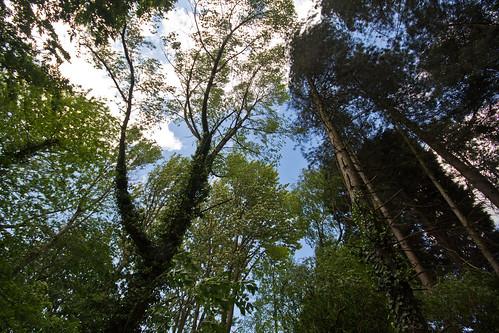 Thwaite Trees